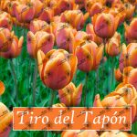 Póster TIRO DEL TAPÓN, hooponopono