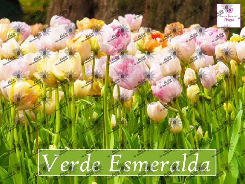 Poster verde esmeralda