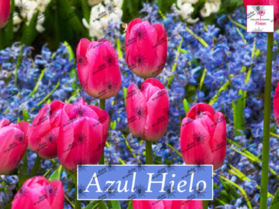 Poster AZUL HIELO