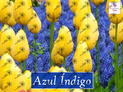 Poster AZUL INDIGO