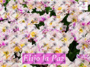 Póster ELIJO LA PAZ, Aloha Ho'oponopono