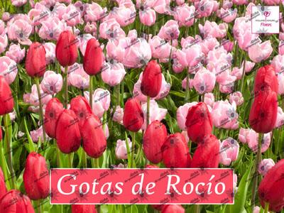 Poster GOTAS DE ROCIO
