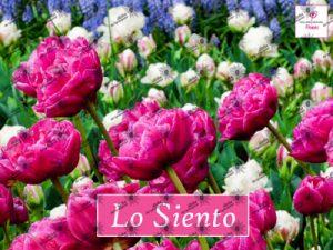 Poster LO SIENTO - Ho'oponopono