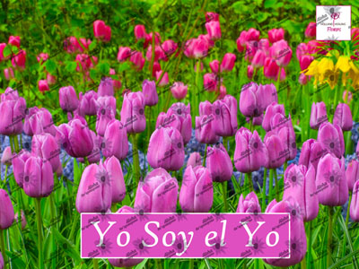 Poster YO SOY EL YO