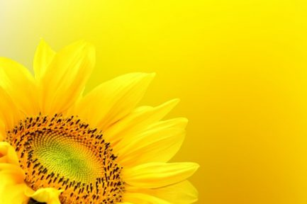 depositphotos_21050957-stock-photo-sunflower-on-summer-background