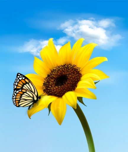 depositphotos_25650889-stock-illustration-background-with-sunflower-field-over