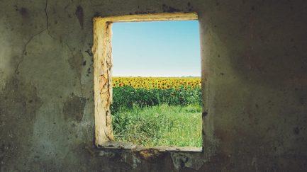 sunflower-868119